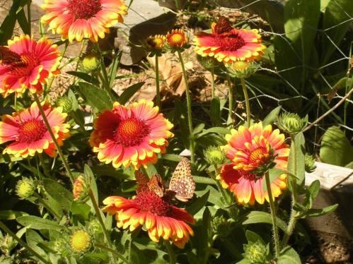RedFlowersWithButterflies.jpg